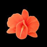 Kwiaty cukrowe - Storczyk opak. 10 szt. pomarańczowy