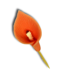 HOKUS - Kalia pomarańczowa op. 32 szt.