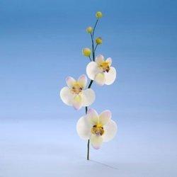 Modecor - Orchidea - bukiet z cukru 33 cm