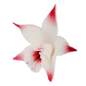 Katleja różowa malowana - 10 szt