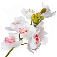 Gałązka Storczyk Biały Z Różowym Środkiem 62cm [ Komplet 4szt ]