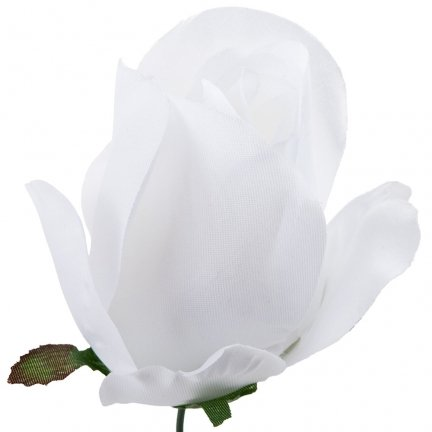 Róża Pąk Biały [Komplet 12szt]
