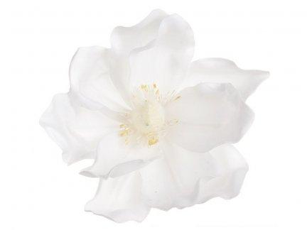 Magnolia Biała [Komplet - 20 Sztuk]
