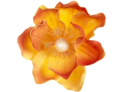 Magnolia Pomarańcz [Komplet - 20 Sztuk]