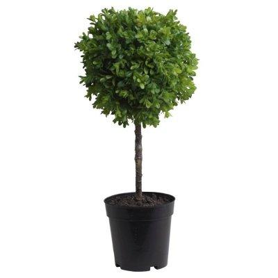 Drzewko bukszpanowe Chic Antique - wys. 46 cm