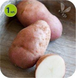 Ziemniak Eco Sarpo Una 1 sztuka