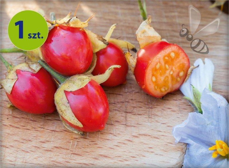 Pomidorki Liczi 1 szt.