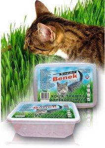Certech Super Benek Trawka szybkorosnąca dla kota 150g