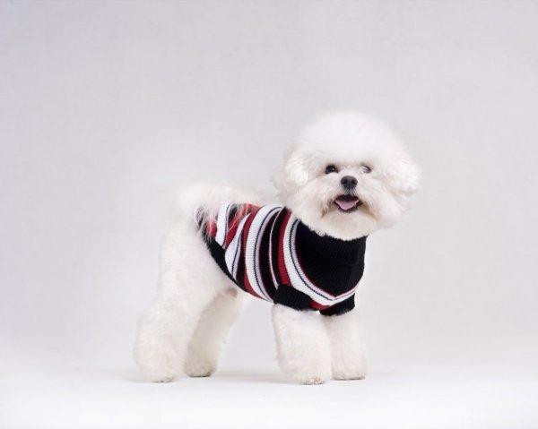 Ami Play Sweter dla psa Glasgow 50 cm Szare paski