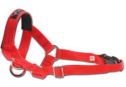 Amiplay Halter XS N1 Yorkshire Terrier czerwony