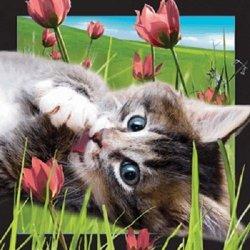 Pocztówka 3D - Kot