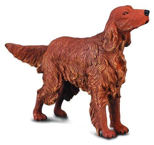 Pies seter irlandzki rudy
