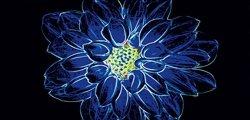 Fluorescent Flower