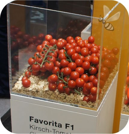 Pomidor szczepiony Favorita