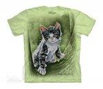 Tree Kitten - The Mountain Junior