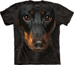 Dachshund Face - Jamnik -  The Mountain