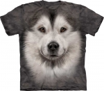 Alaskan Malamute Face - The Mountain