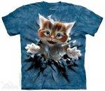 Ginger Kitten Breakthrough - The Mountain