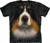 Bernese Mountain Dog Face - Berneński Pies Pasterski