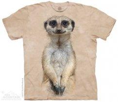 Meerkat Portrait - The Mountain OUTLET