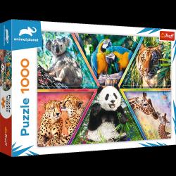 Puzzle Królestwo Zwierząt 1000 el. Animal Planet Trefl 10672