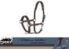 Kantar PIN BUCKLE GLOSSY DESSIN - PLATINUM EDITION 2020/21 - Eskadron - havanabrown