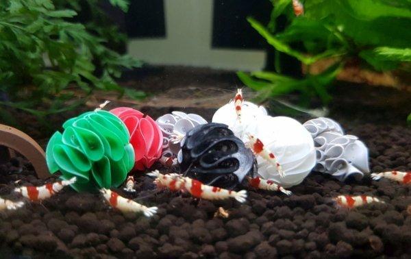 Baby Shrimp Shelters Czerwony 20 szt