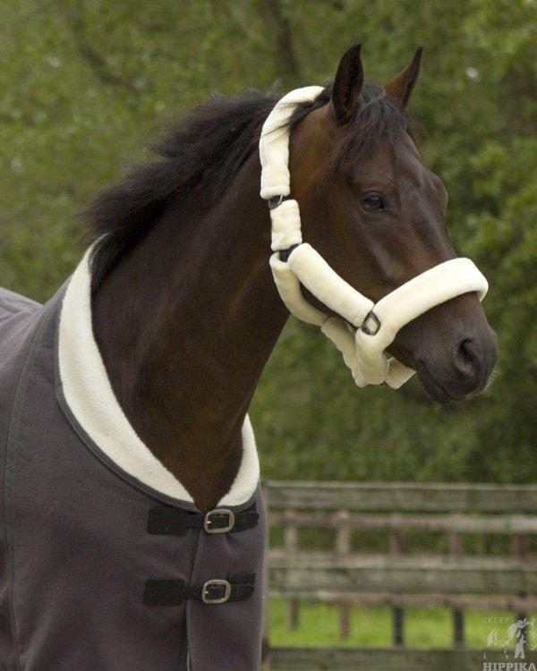 Kantar dla wrażliwych koni Alaska QHP