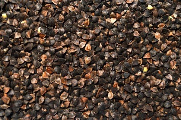 Gryka - nasiona 25kg