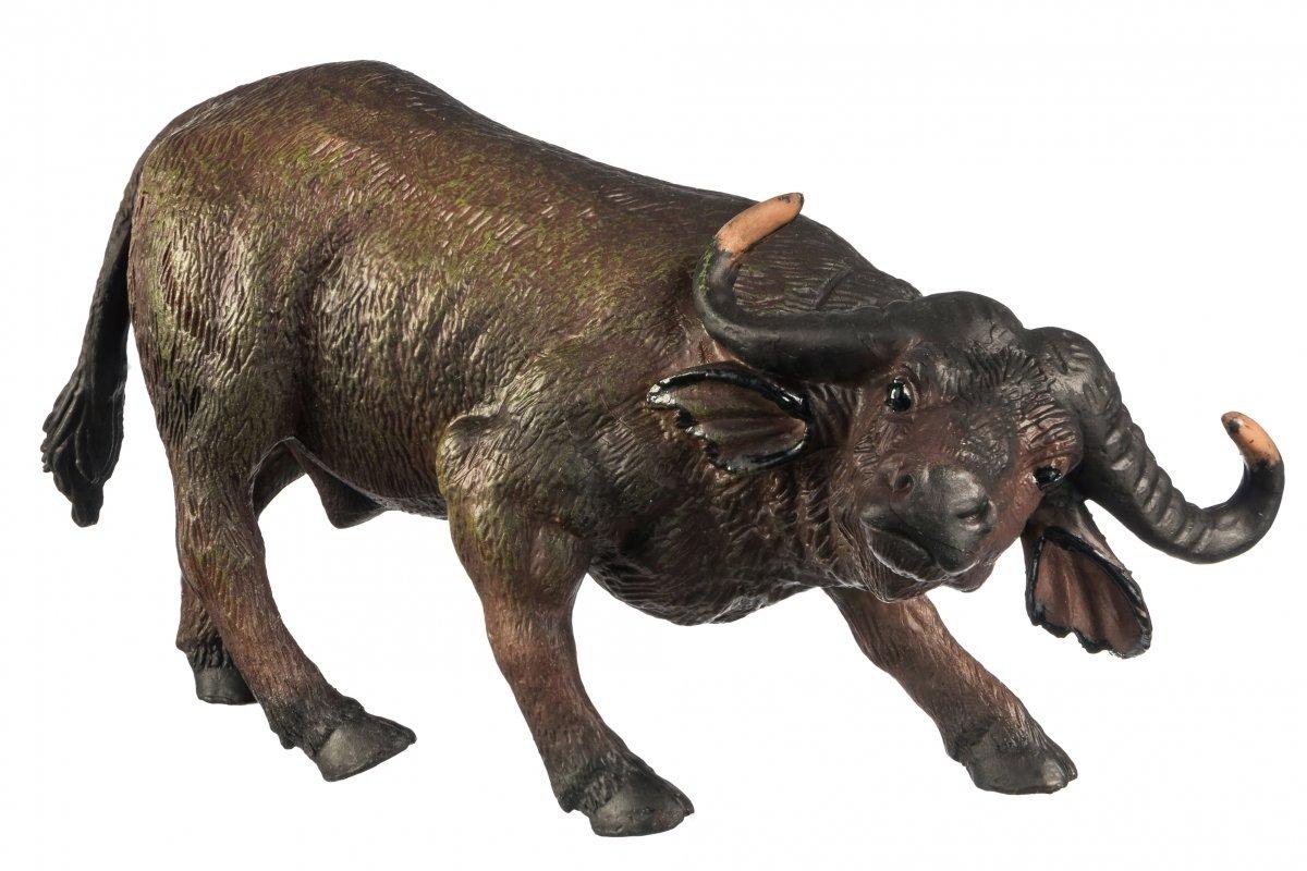 Afrykański Bawół