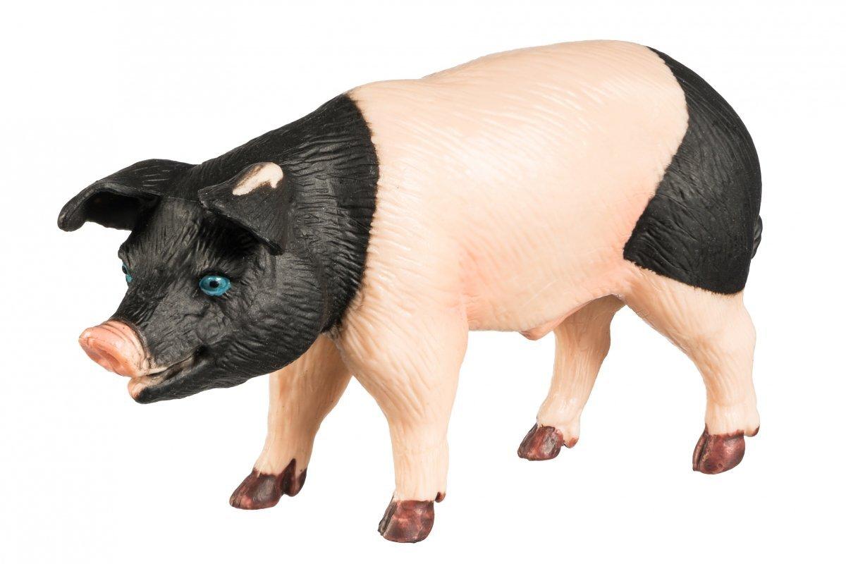 Samiec Świni Rasy Jinhua