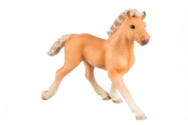 Koń 03