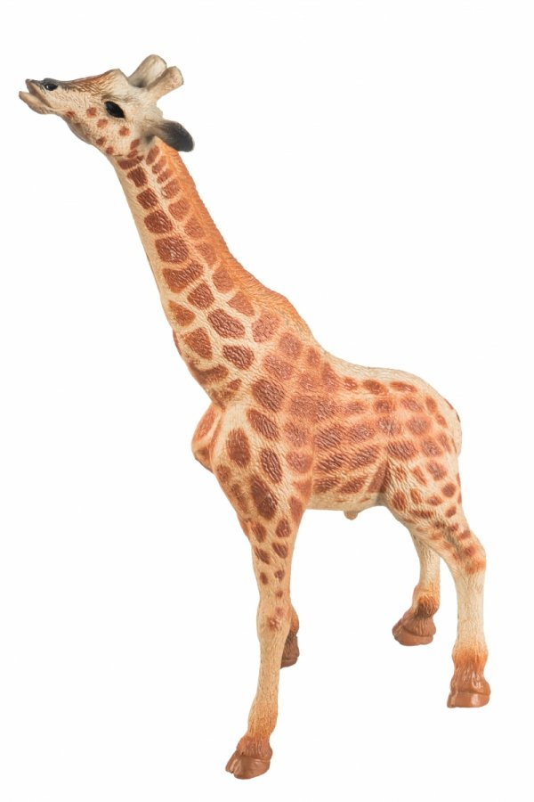 Samiec Żyrafy