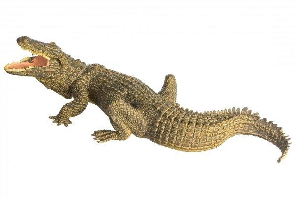 Krokodyl Samica