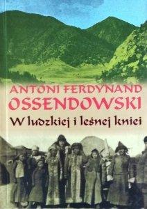 Antoni Ossendowski • W ludzkiej i leśnej kniei
