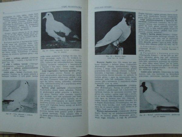 Stefan Peterfi • Hodowla gołębi
