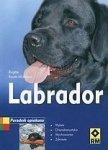 Labrador Poradnik opiekuna