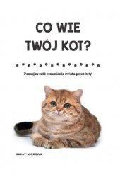 Co wie Twój kot? Poznaj sposób rozumienia świata przez koty