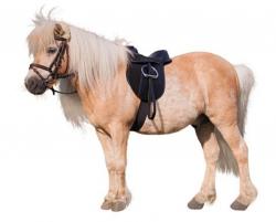 Siodło kompletne Pony 15