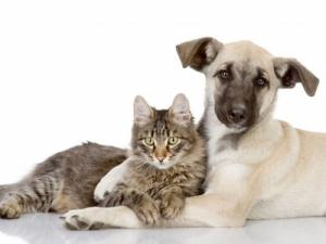 Dla Psów i kotów