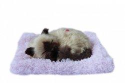 ASKATO Maskotka interaktywna Śpiący kotek brązowy na poduszce
