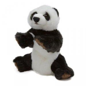 Dante Pacynka Panda National Geographic