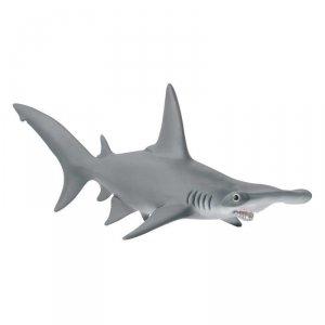 Rekin Młotowaty