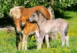 Puzzle 120 Castorland B-12909 Ponies in the Meadow