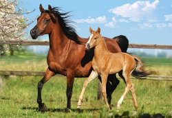 Puzzle 260 Castorland B-27064 Mare and Foal