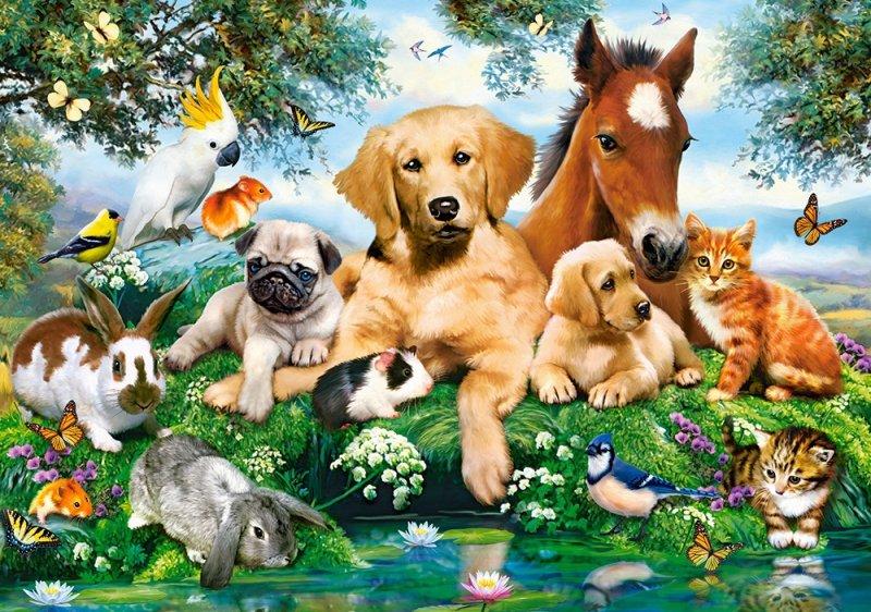 Puzzle 500 Castorland B-53230 Zwierzęta - Spotkanie