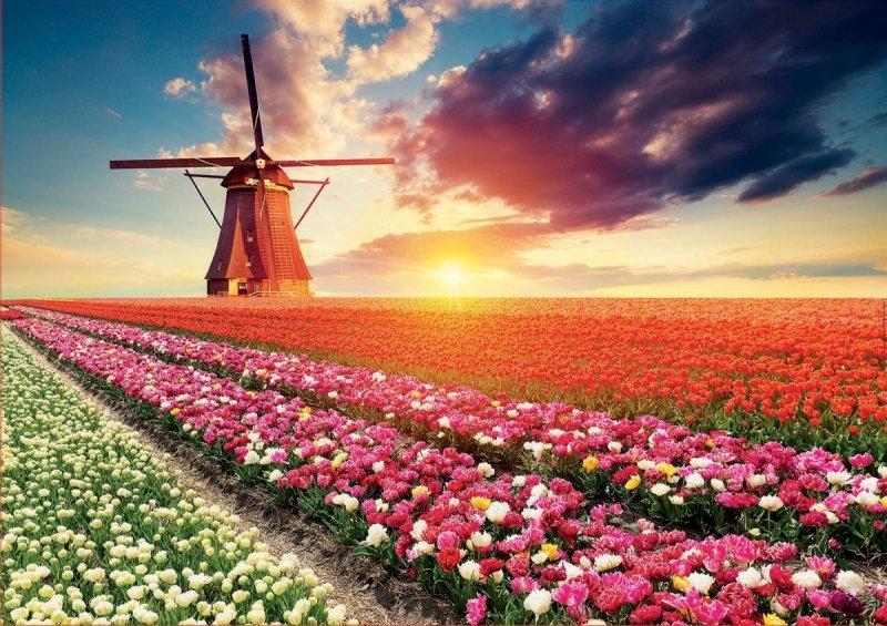 Puzzle 1500 Educa 18465 Tulipany - Krajobraz