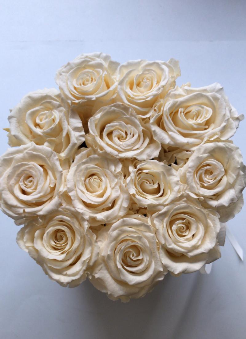 Ecru,WIECZNE żywe róże w średnim velvet białym boxie