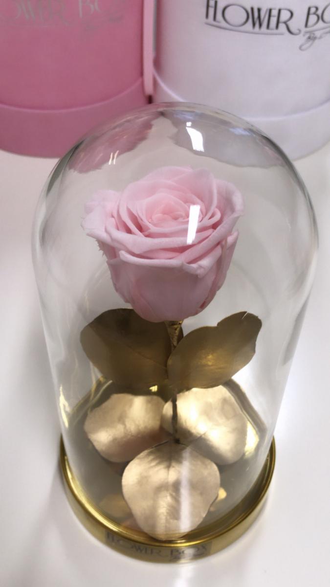Wieczna żywa róża w szkatułce