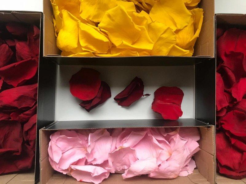 Płatki róż wiecznych